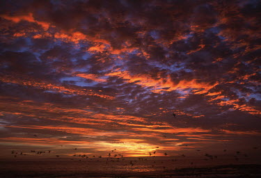 A sunrise on Dassen Island - Dassen Island, South Africa Sunset,Red,Colour,Birds,Flying,Coastal,Dramat,Cloud formation,Island