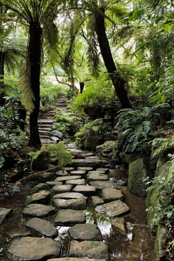 Pathway through the Kirstenbosch National Botanical Garden - Western Cape Province, South Africa Pathway,Stones,Forest,Palm tree,Fern,Steps