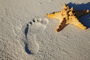 A washed-up starfish and footprint in the sand - South Africa Starfish,Washed ashore,footprint,Beach,Coastal,Sand,Nature,Yellow,Colour