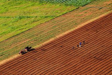Aerial view of farmland - South Africa Farmland,Farmworkers,Plantingm Lines,Green,Brown,Bare earth
