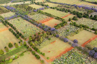 Aerial view of a graveyard and tombstones - Johannesburg, South Africa Aerial,Gravestones,Landscape,Remembrance,Rows,Order,Stones,Trees,Road