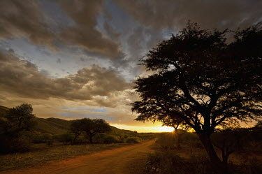 Sunset along a dirt track in the Kalahari bushveld/sub-tropical woodland - South Africa Sunset,Dirt Road,Africa Bush,Woodland,Nobody,Distance,Cloud formation,Landscape