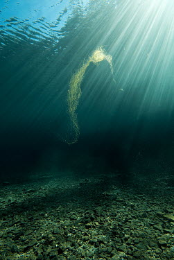 Discarded fishing net floating through the water column ghost fishing,fishing gear,discarded,ghost net,fishing net,water column,floating,trap,death trap,entanglement,tangled,net,fishing,pollution,litter,lethal,dead,shark sharks,fish,scuba,diver,human,perso