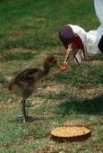 Crane Breeding